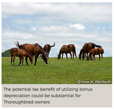 Tax Depreciation Opportunities for Thoroughbred Owners